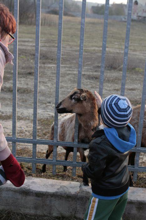 Spotkanie z owcami