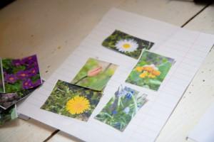 Księga kwiatów