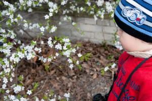 Wiedza o przyrodzie – lekcje poglądowe – edukacja w duchu Charlotte Mason