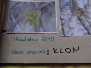 Mały przyrodnik – Pamiętnik drzewa