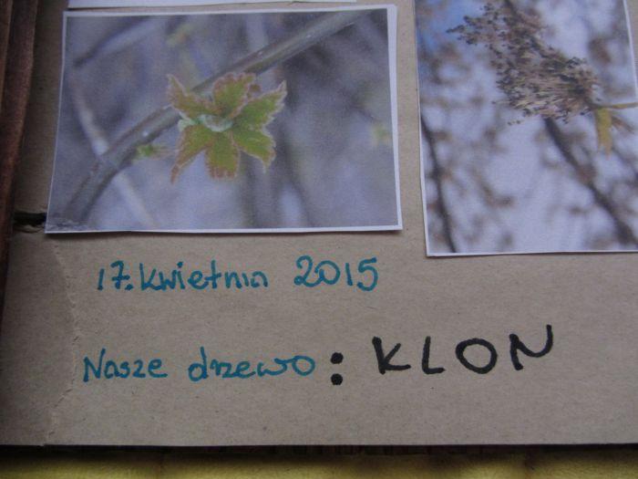 pamiętnik drzewa