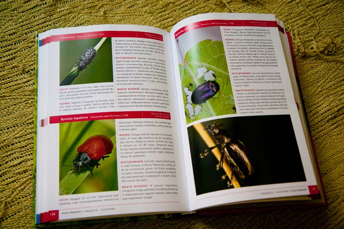 atlas-owadow