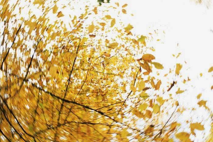 jesień, jesienne liście