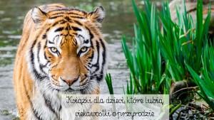 animal-animal-photography-blur-145939